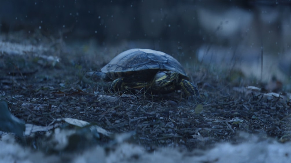 Rendered VFX Turtle from New York Lottery TV Advert